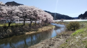 Furudono-sakura-avenue