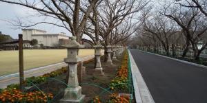 Chiran-heiwa-koen-namiki-street